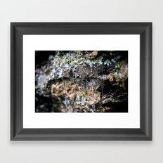 Cobwebs On Rocks After Rain Framed Art Print