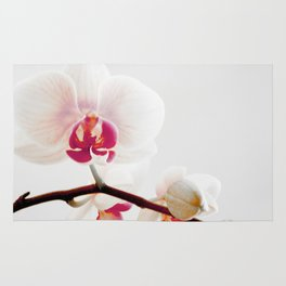 The Orchid that Refused to Sit Still Rug