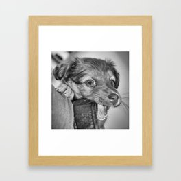 Puppy biting camera strap Framed Art Print