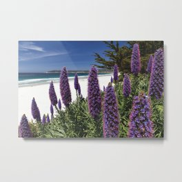 Blue Wildflowers Blooming Along the Pacific Beach,  Metal Print