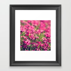 Through the Pink Framed Art Print