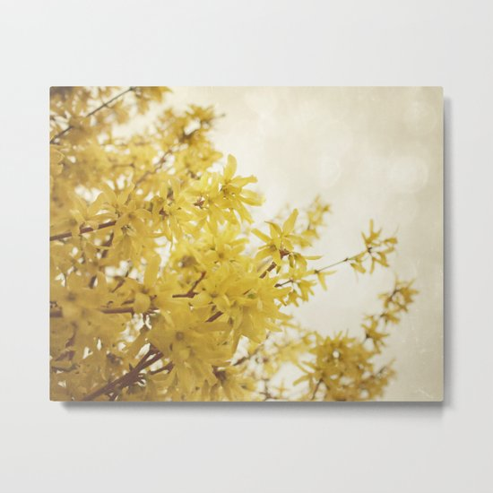 Dreamy Forsythia  Metal Print