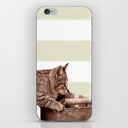 Cat Play on stripes iPhone Skin