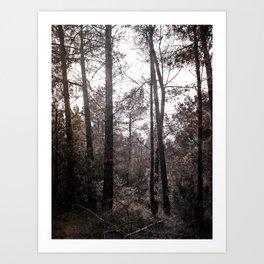 Bosc Art Print
