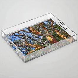 MADRONA TREE DEAD OR ALIVE Acrylic Tray