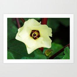 Okra Flower Art Print
