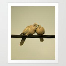 loving doves Art Print