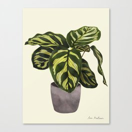 calathea botanical interior plant Canvas Print