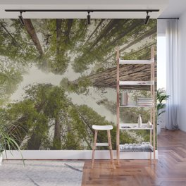 Into the Mist - Nature Photography Wall Mural
