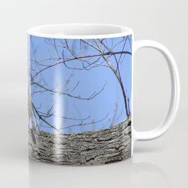The Cooper Hawk Coffee Mug