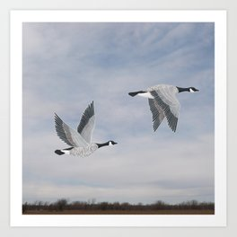 Canada geese and blue sky Art Print