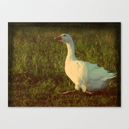 Walk This Way, Goose Canvas Print