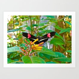 Beautiful Butterfly Art Print