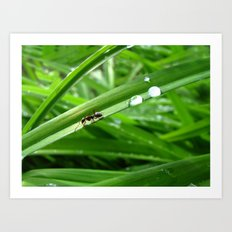 Ant with two drops of water Art Print