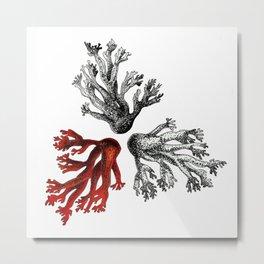 Coral 02 Metal Print