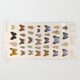 Vintage Scientific Insect Butterfly Moth Biological Hand Drawn Species Art Illustration Beach Towel