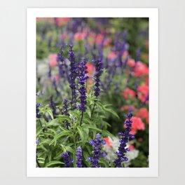 Flowers in Butchart's Garden Art Print