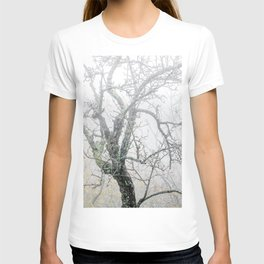 Naked tree surrounded by fog T-shirt