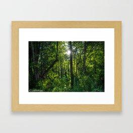 Woods at Iroquois Wetlands Framed Art Print