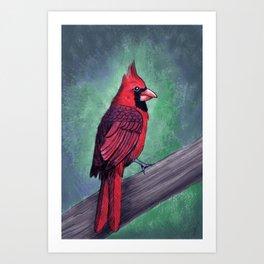 Northern Cardinal Artwork  Art Print