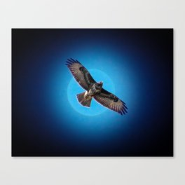 Bird of prey in the moonlight Canvas Print