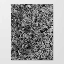 B&W Autumn Turf Canvas Print
