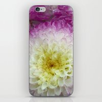 dahlia iPhone & iPod Skins featuring dahlia by blackpool