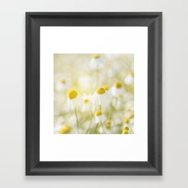 Floral Spring Meadow with Flowers Camomile and Daisies Framed Art Print