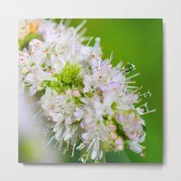 Macro flower with water dropplet Metal Print