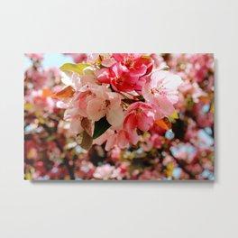 Pretty Pink Spring Blossoms Metal Print