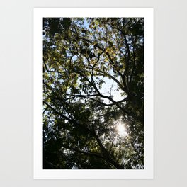 Reaching for the Light Art Print