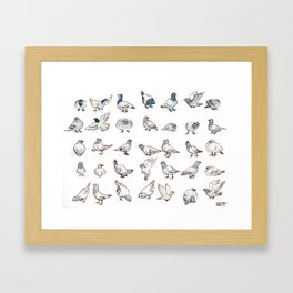 Pigeon Collection Framed Art Print