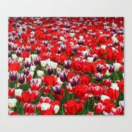 Tulip Sensation Canvas Print