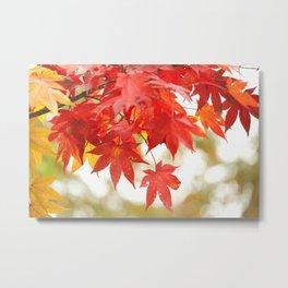 Japanese Red Maple Metal Print