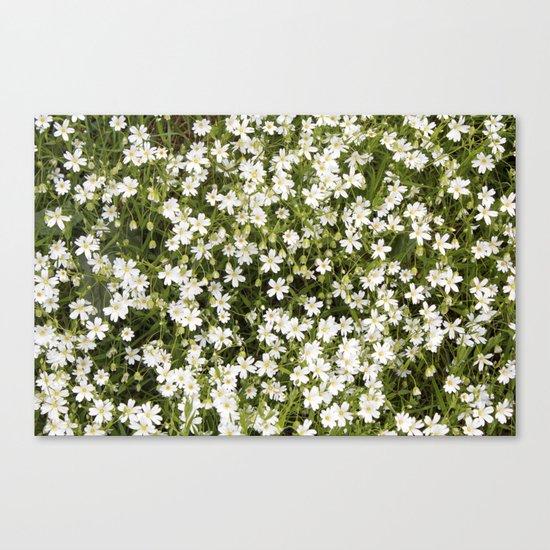 Stitchwort Stellaria Wild Flowers Canvas Print