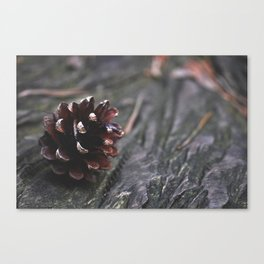 Pinecone - Nature Photography Canvas Print