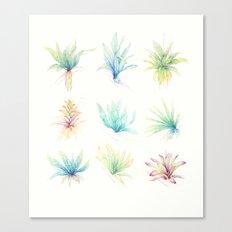 Epiphytes. Canvas Print