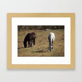 Two Horses, One Field Framed Art Print