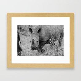 White Rhino Framed Art Print