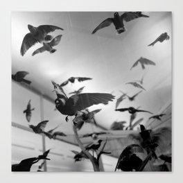 winged flight Canvas Print
