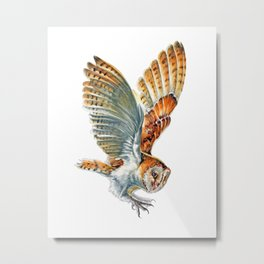 Barn Owl Landing  Metal Print