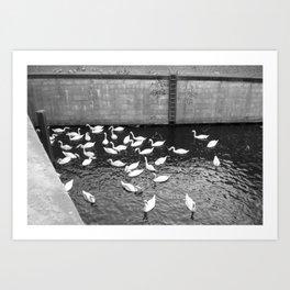 Swans in Berlin Art Print