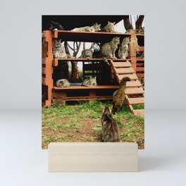 Kitty Coop (Lanai Cat Sanctuary) Mini Art Print