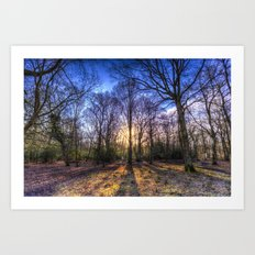 The Morning Sun Forest Art Print