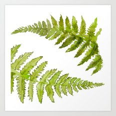 Etched Into Nature No.1 Forest Ferns Art Print