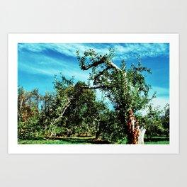 Apple Orchard 2 // Upstate New York Art Print
