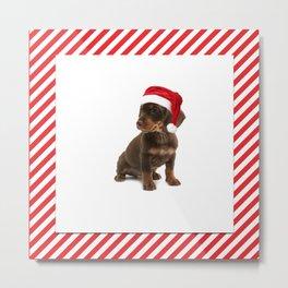 Daschshund Puppy Wearing a Santa Hat Metal Print