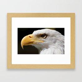 Bald Eagle | Eagle Photography | Eagle Portrait | Bird of Prey | Raptor Framed Art Print