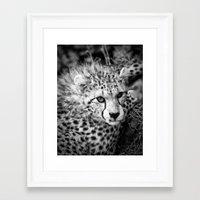cheetah Framed Art Prints featuring Cheetah by Mark Nelson
