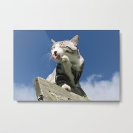 Cat likes anyway high places Metal Print